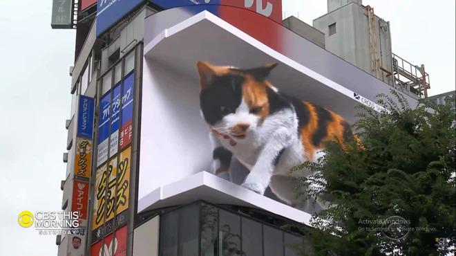 Mèo khổng lồ xuất hiện ở Nhật